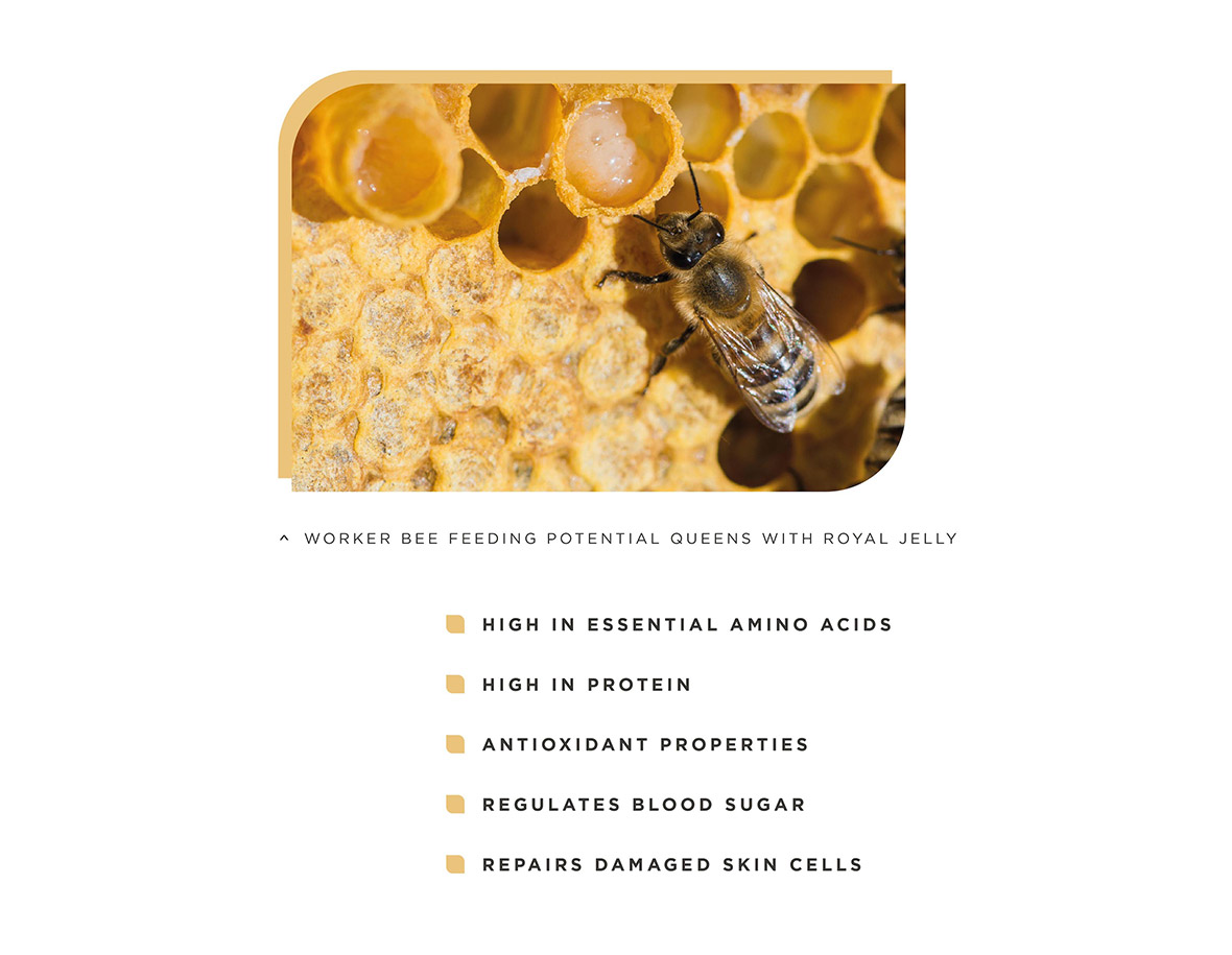 Capsule Supplements. Worker Bee Feeding Potential Queens with Royal Jelly. - High in essential amino acids; - High in Protein; - Antioxidant properties; - Regulates blood sugar; - Repairs damaged skin cells
