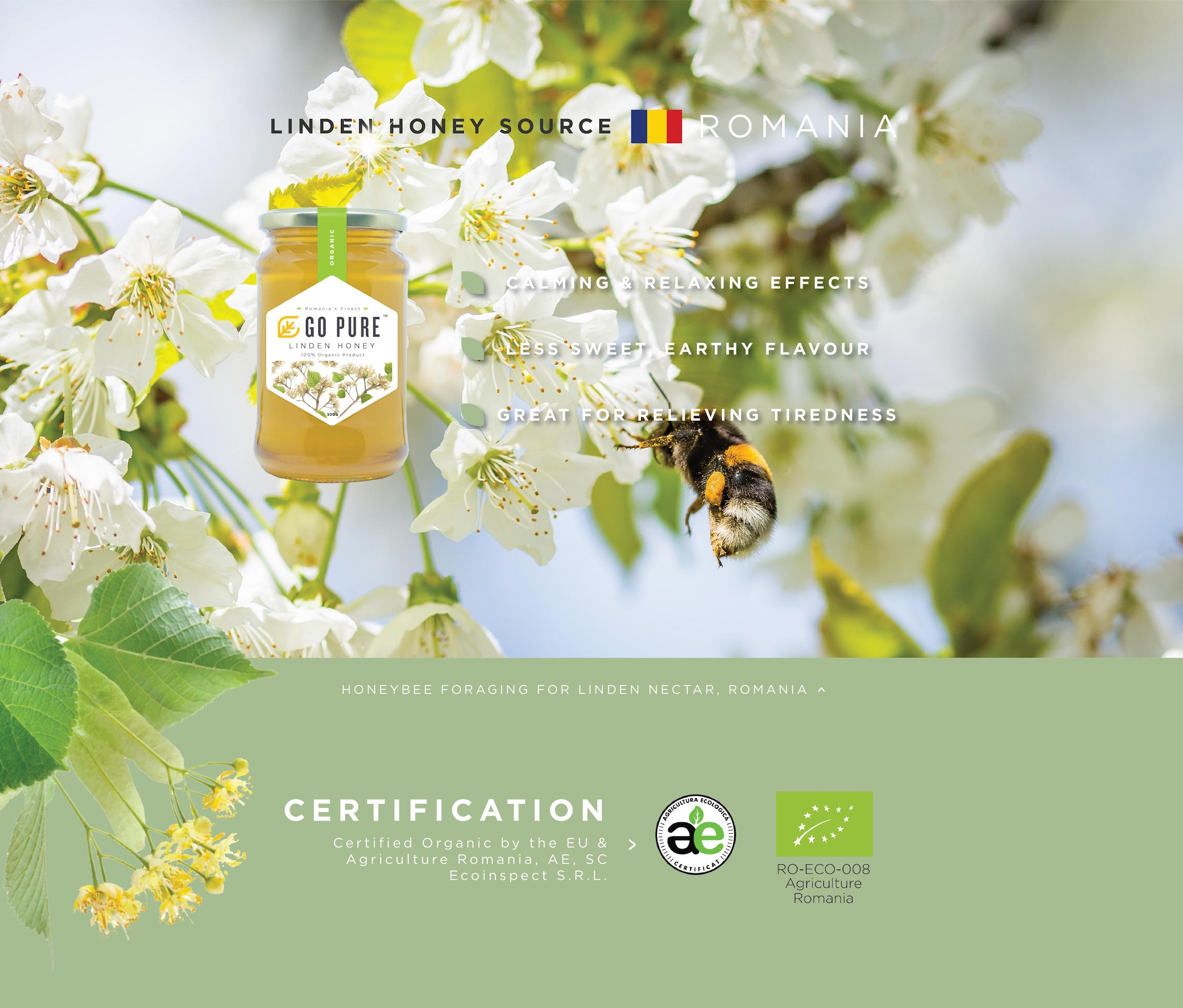 linden honey source from Romania. calming and relaxing effects, less sweet & earthy flavor, great for reliving tiredness. honeybee foraging for linden nectar, romania.